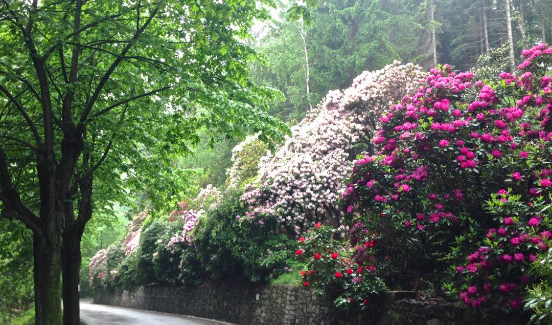 Conca dei rododendri Oasi Zegna