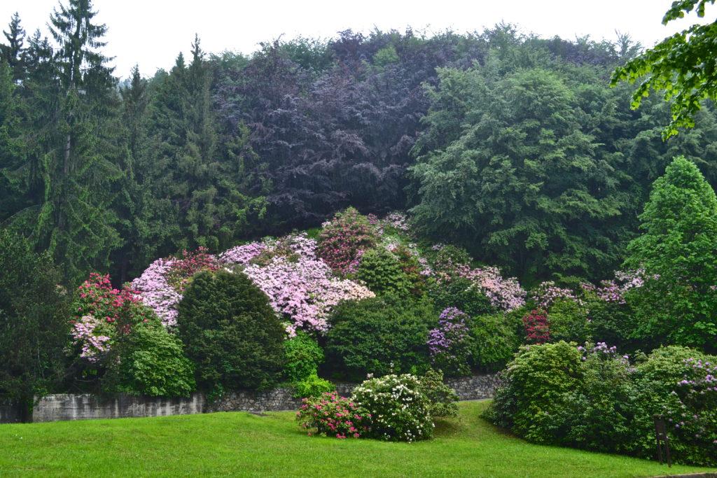 conca dei rododendri